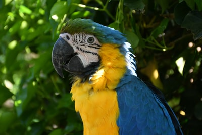 blue yellow and green parrot