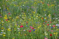 A Meadow Field Of Flowers  field stories