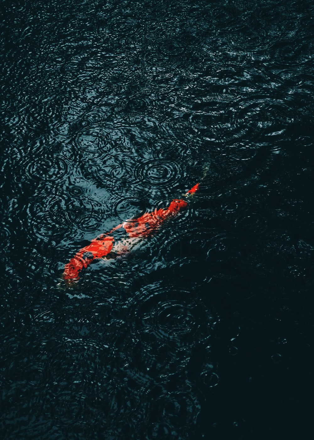 orange and white koi fish on water