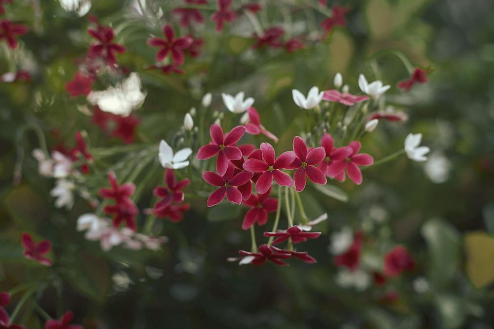 white and red flowers in tilt shift lens