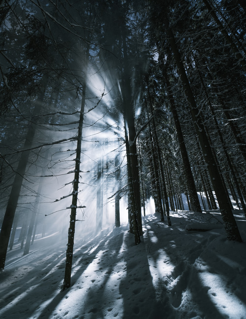 bare trees covered with snow