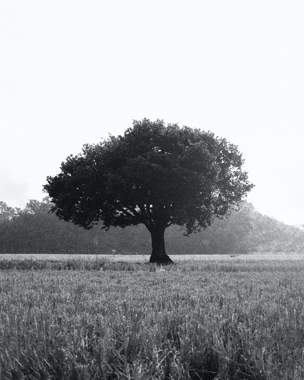 grayscale photo of tree in the middle of grass field