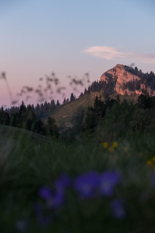 purple flower field near brown mountain during daytime