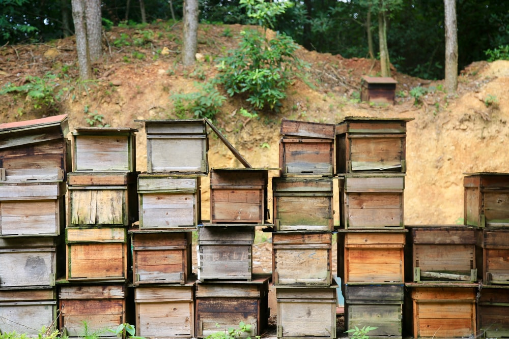 brown wooden crates on forest during daytime