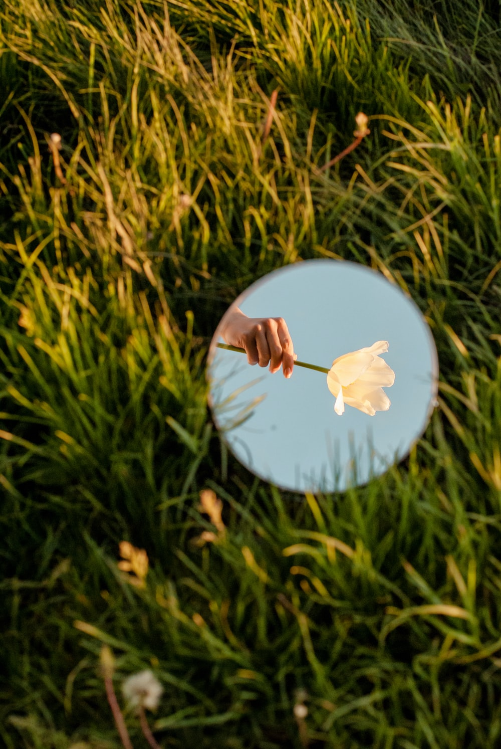 white and blue floral round ornament on green grass