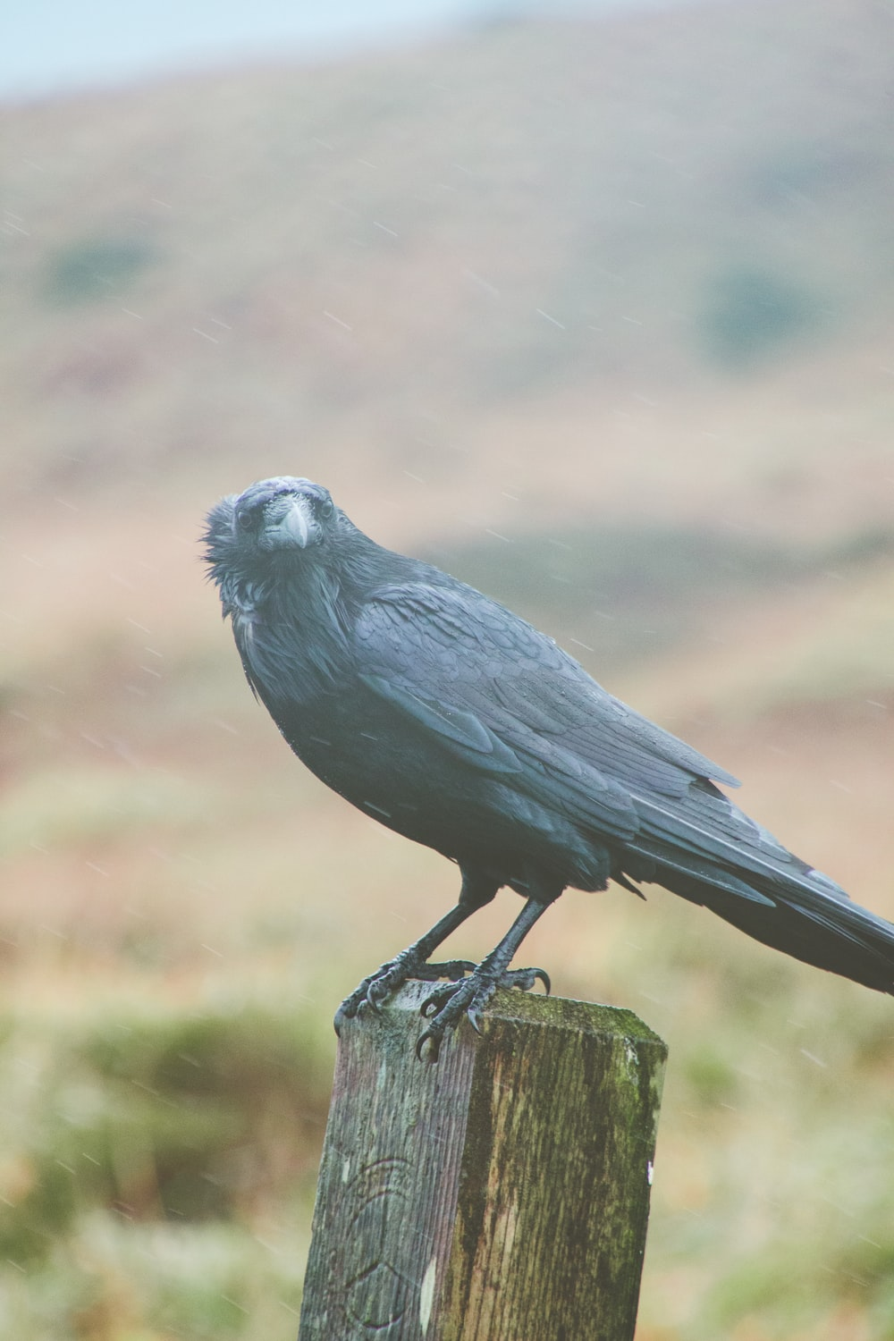black and gray bird on brown wooden stick