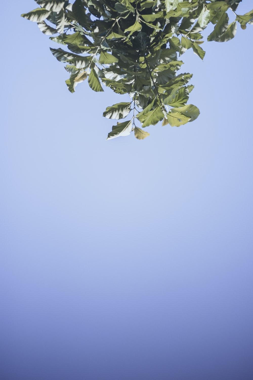 green leaf under blue sky during daytime