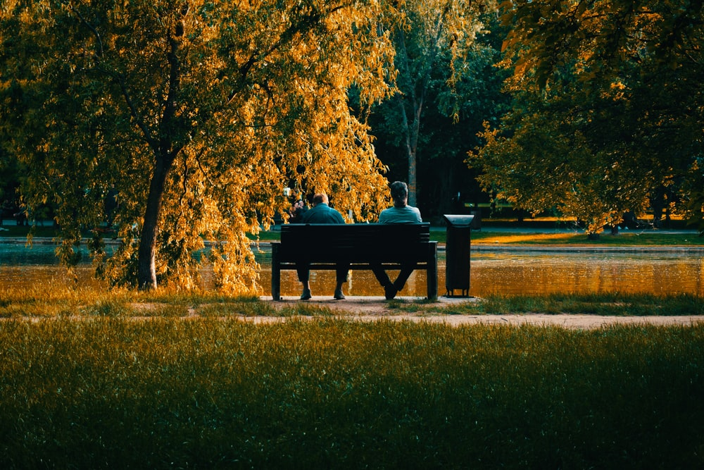 brown wooden bench on green grass field near brown trees during daytime