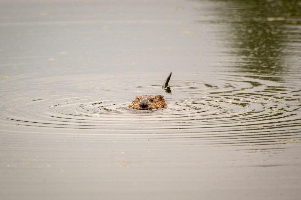 brown animal in water during daytime