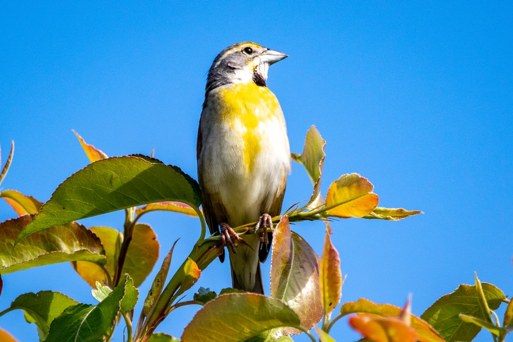 yellow and gray bird on green leaf tree during daytime