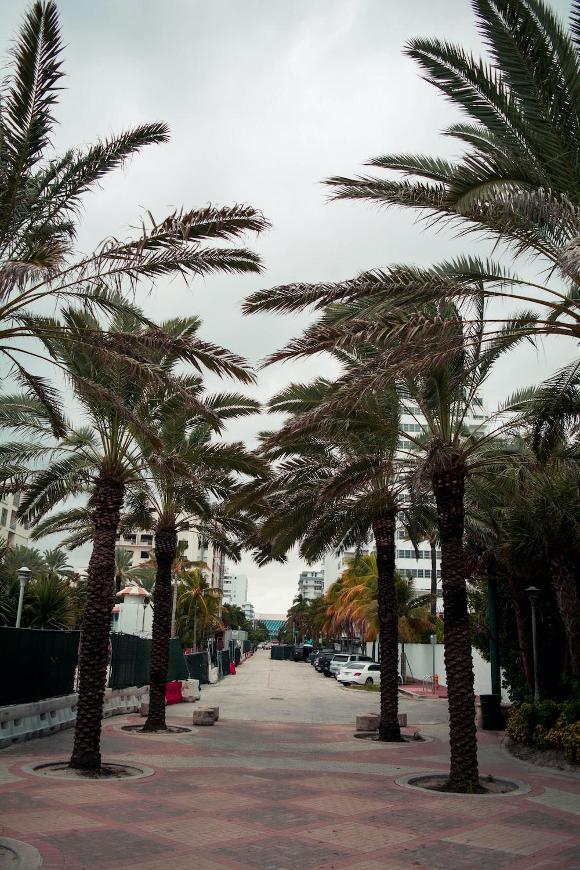people walking on sidewalk near palm trees during daytime