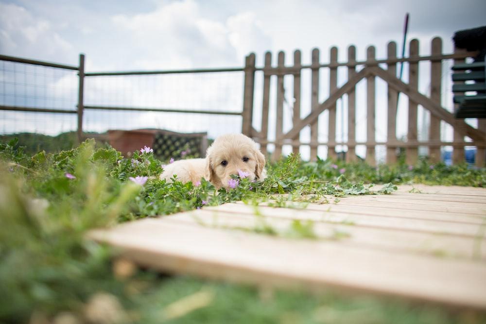 white short coated dog on white wooden fence during daytime