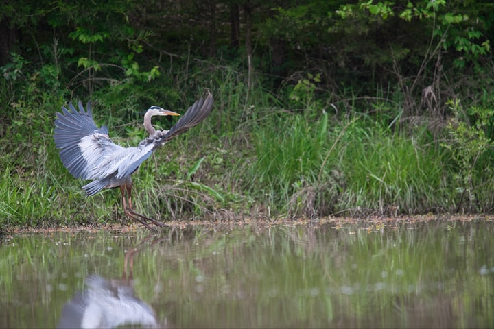 Bon Secour National Wildlife Refuge: A Step Back in Time
