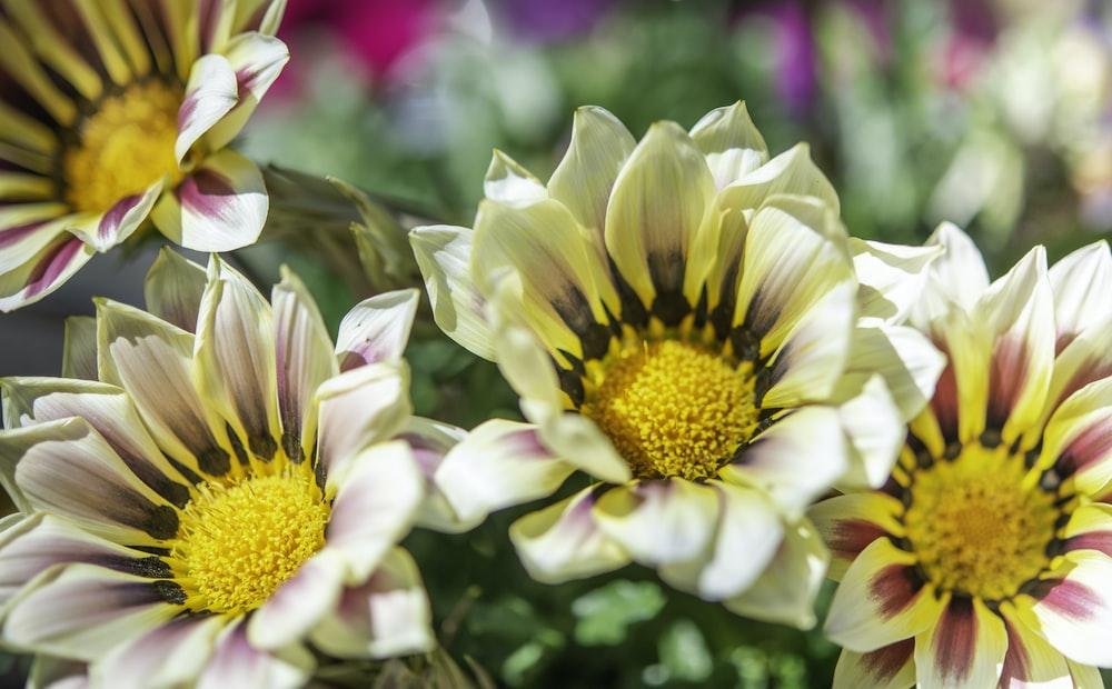 yellow and pink flower in tilt shift lens