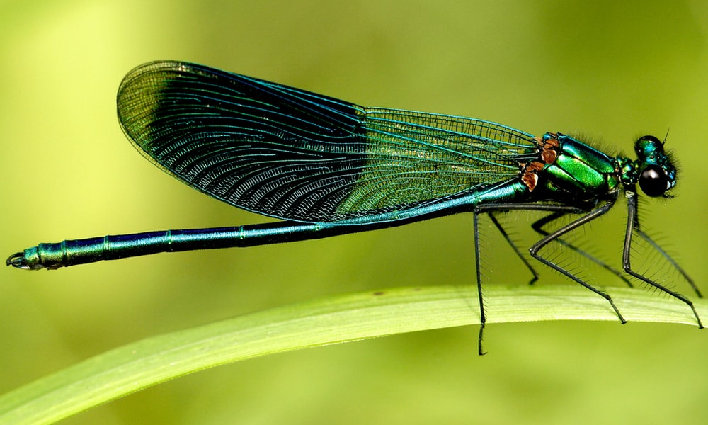 green and black dragonfly on green leaf