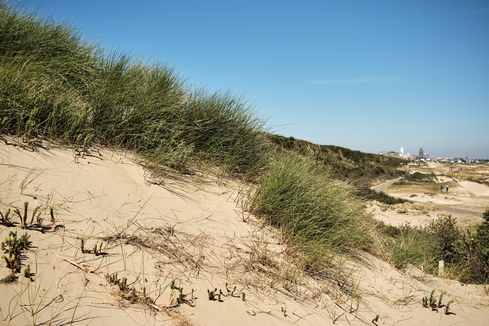 green grass on brown sand under blue sky during daytime