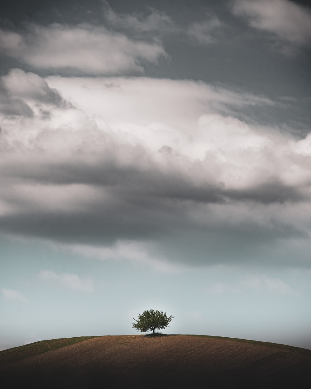 green tree under gray clouds