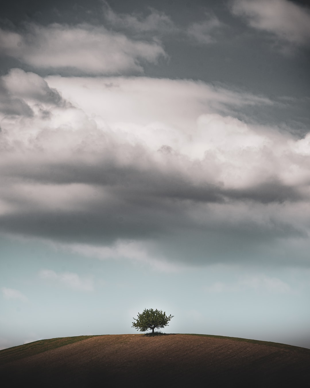 While i was hiking through the Austrian vineyards, I found this outstanding lonely tree. At this moment I knew, this has to be an eyecatching picture.