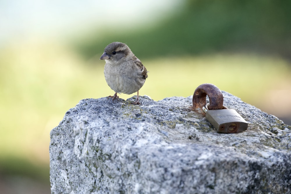 white and gray bird on gray rock