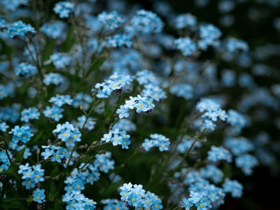 blue flowers with green leaves