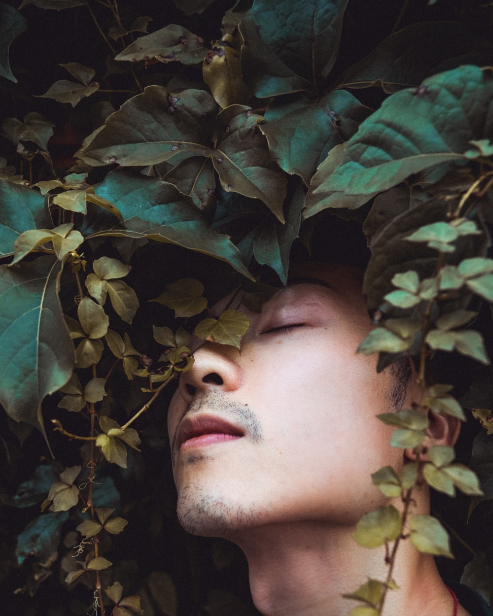 mans face on green leaves