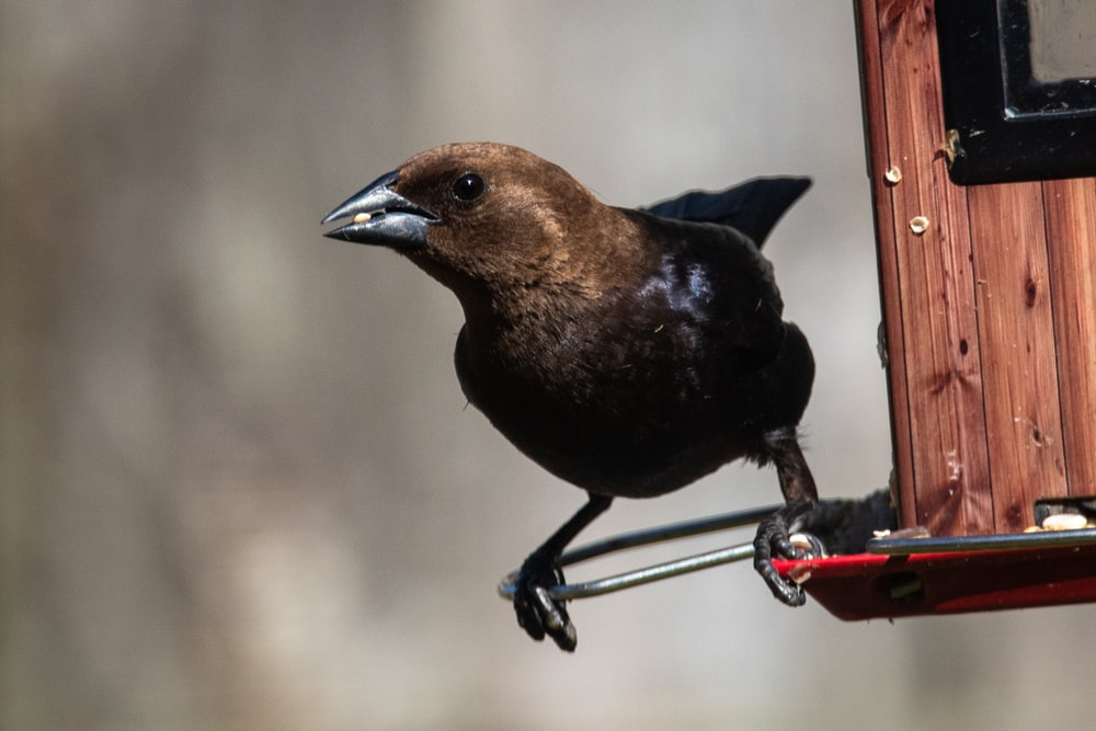 black and brown bird on red metal bar