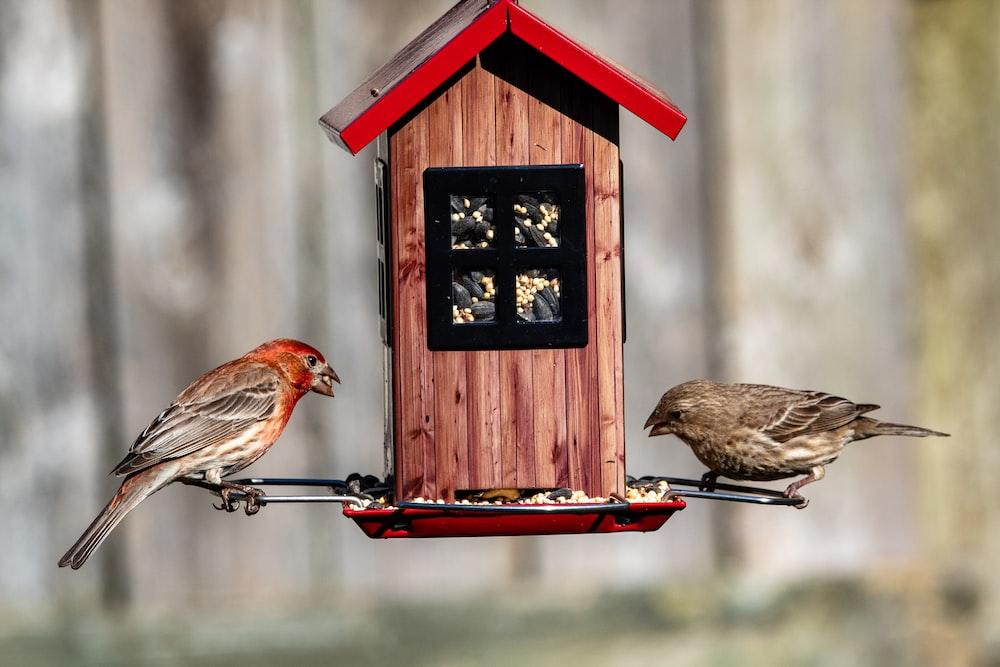 brown bird on red wooden bird house