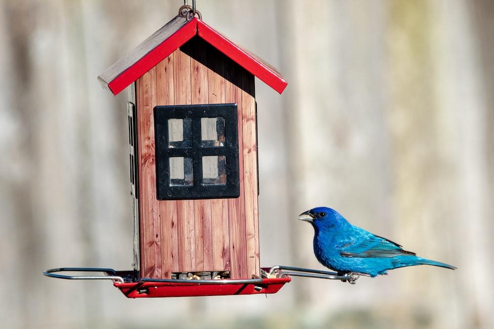 blue bird on brown wooden house