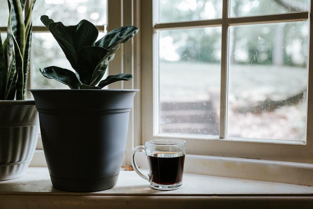 green plant in white ceramic mug beside window