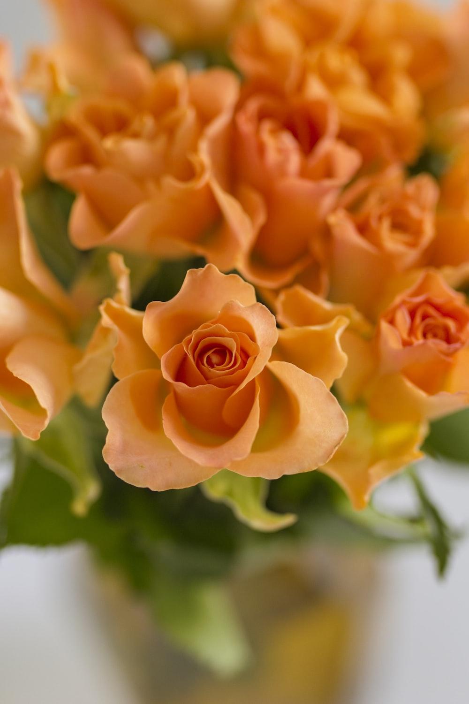 orange rose in bloom during daytime