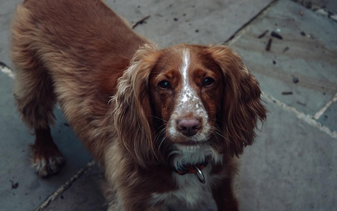 Dog on pavement