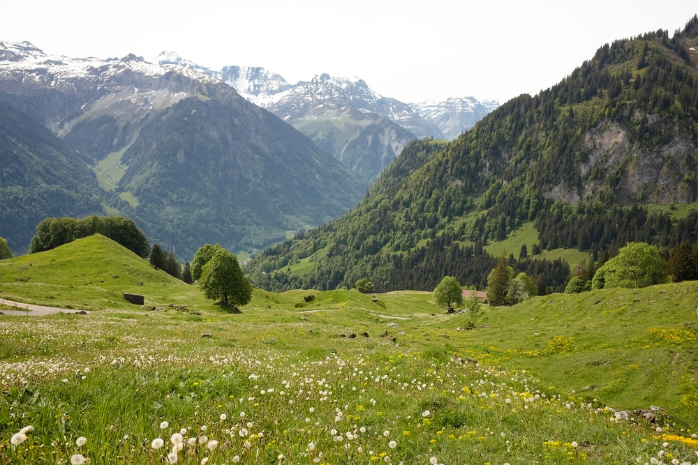 green grass field near green mountains during daytime