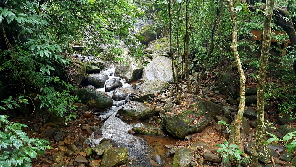 rocky river with rocks and trees
