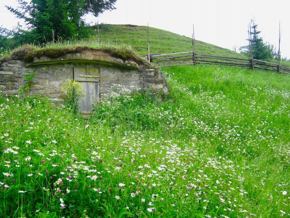 green grass field near brown wooden house during daytime