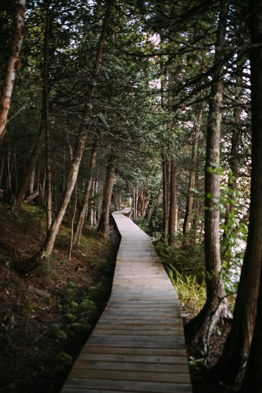 brown wooden pathway in the woods