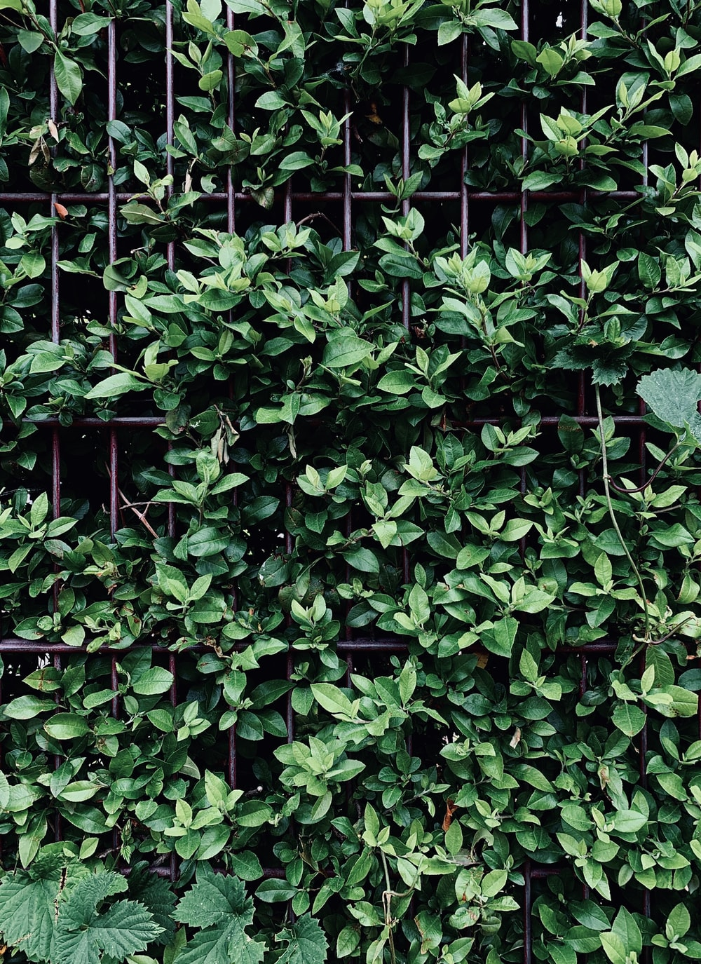 green leaves on gray metal fence