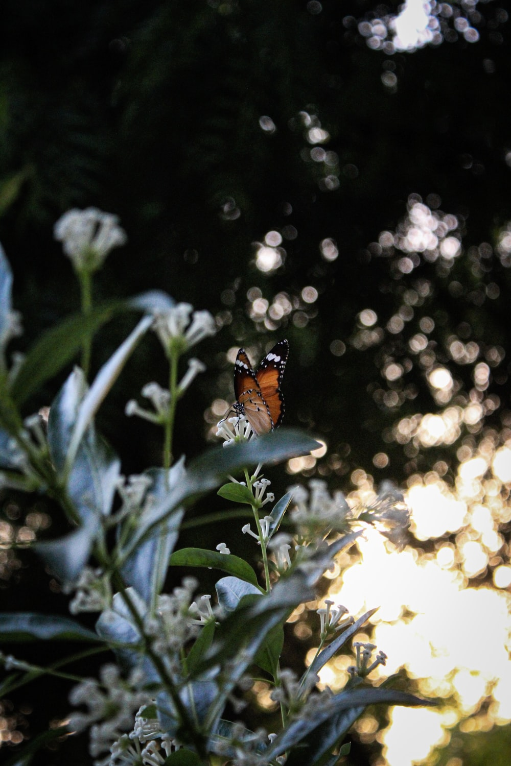 orange and black butterfly perched on green plant during daytime