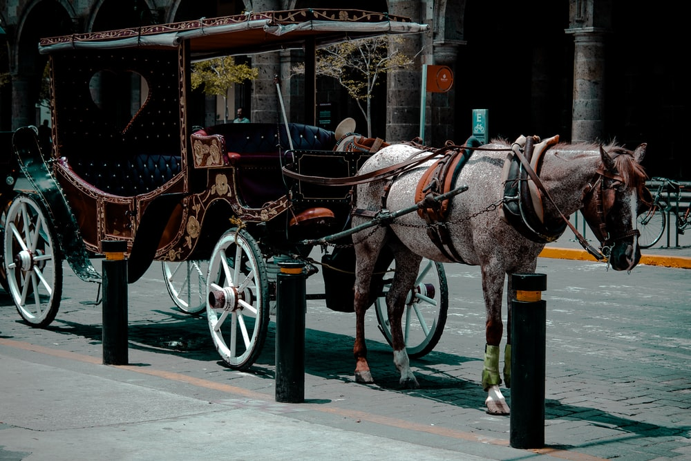 black horse with brown wooden carriage on road during daytime