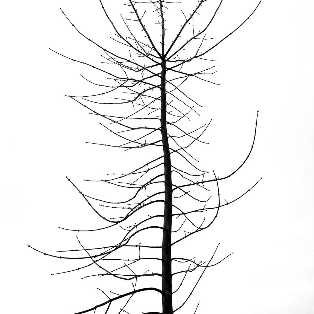 leafless tree in grayscale photography