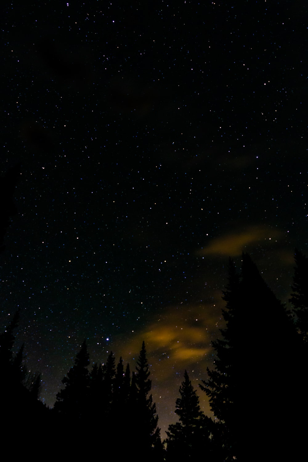 silhouette of trees during night time