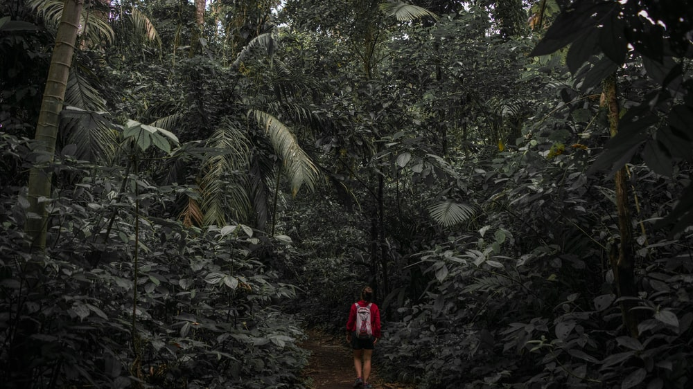 man in red shirt standing on rocky road surrounded by green trees during daytime