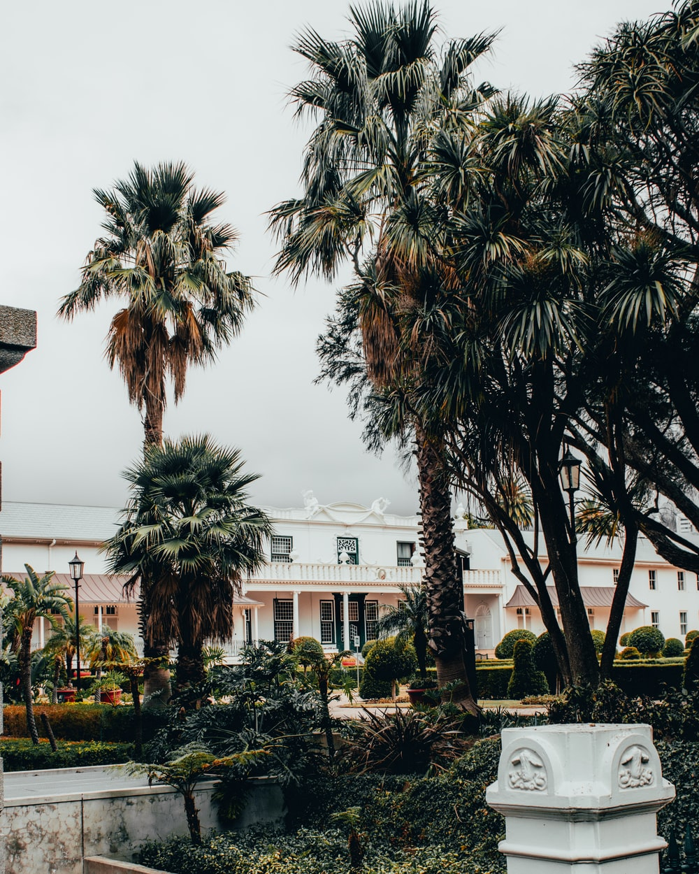 green palm trees near white concrete building during daytime