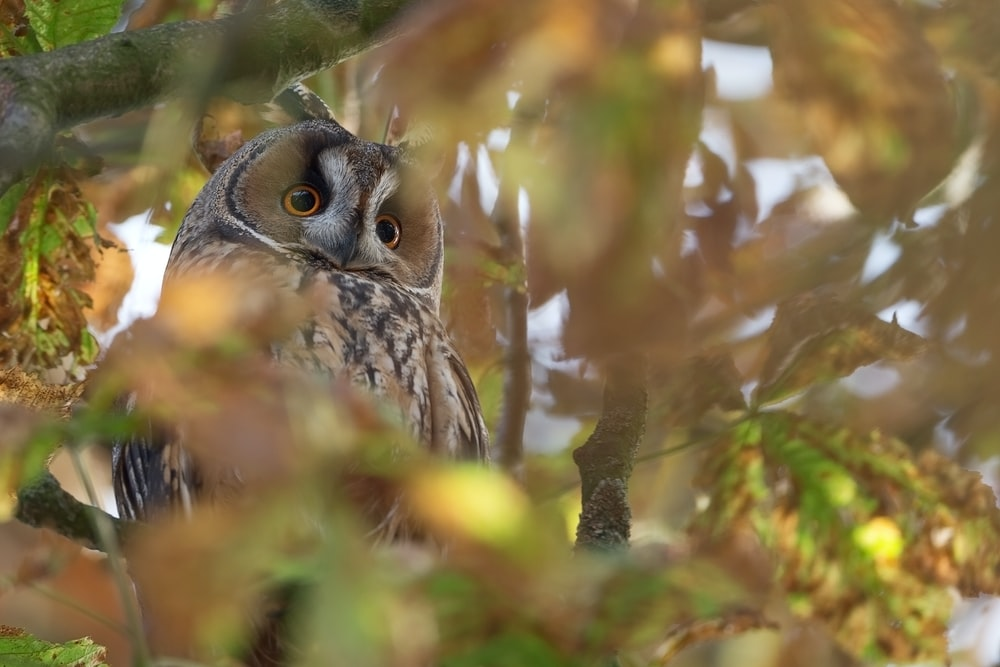 brown owl perched on tree branch during daytime