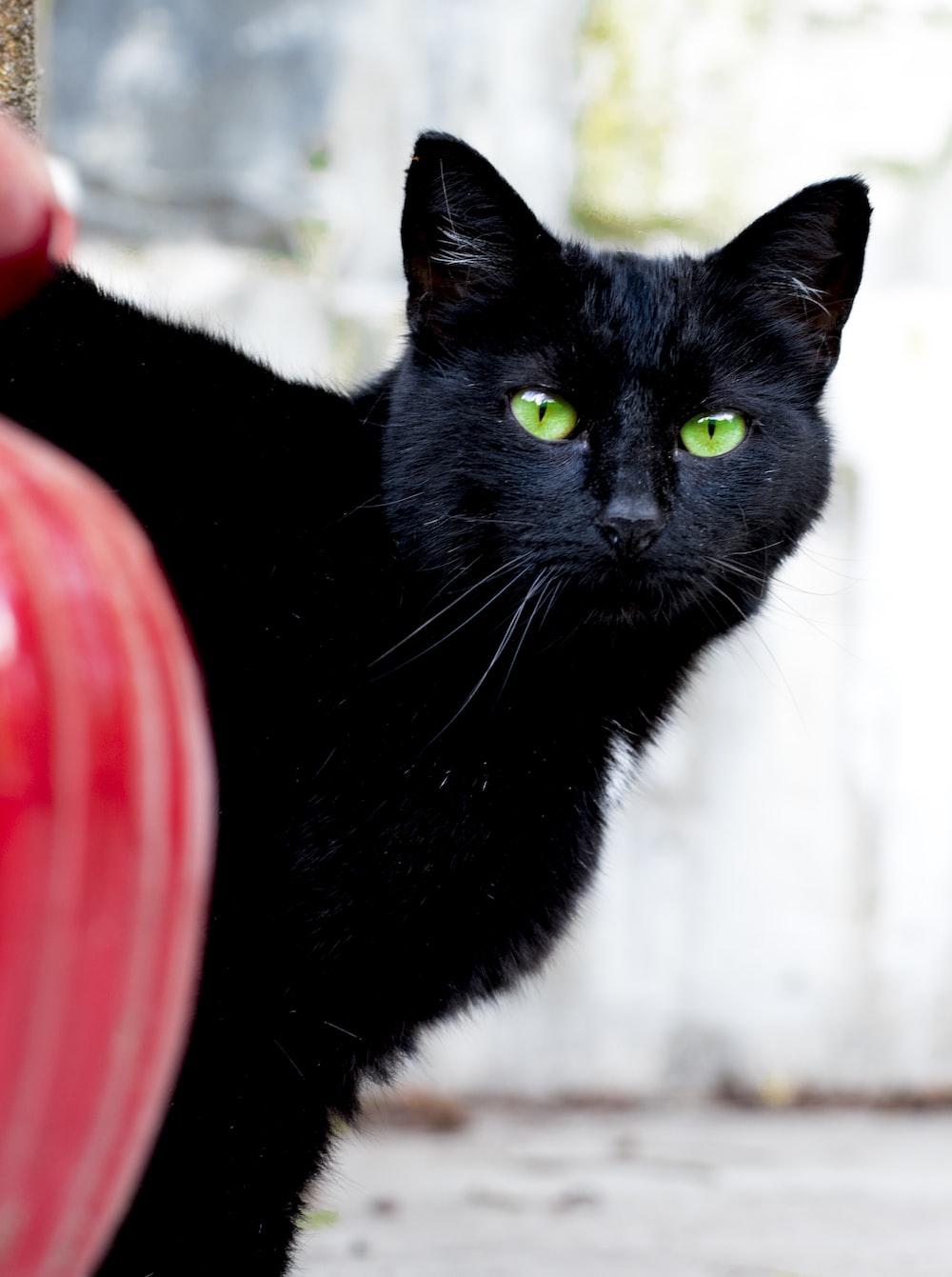 black cat on red plastic container