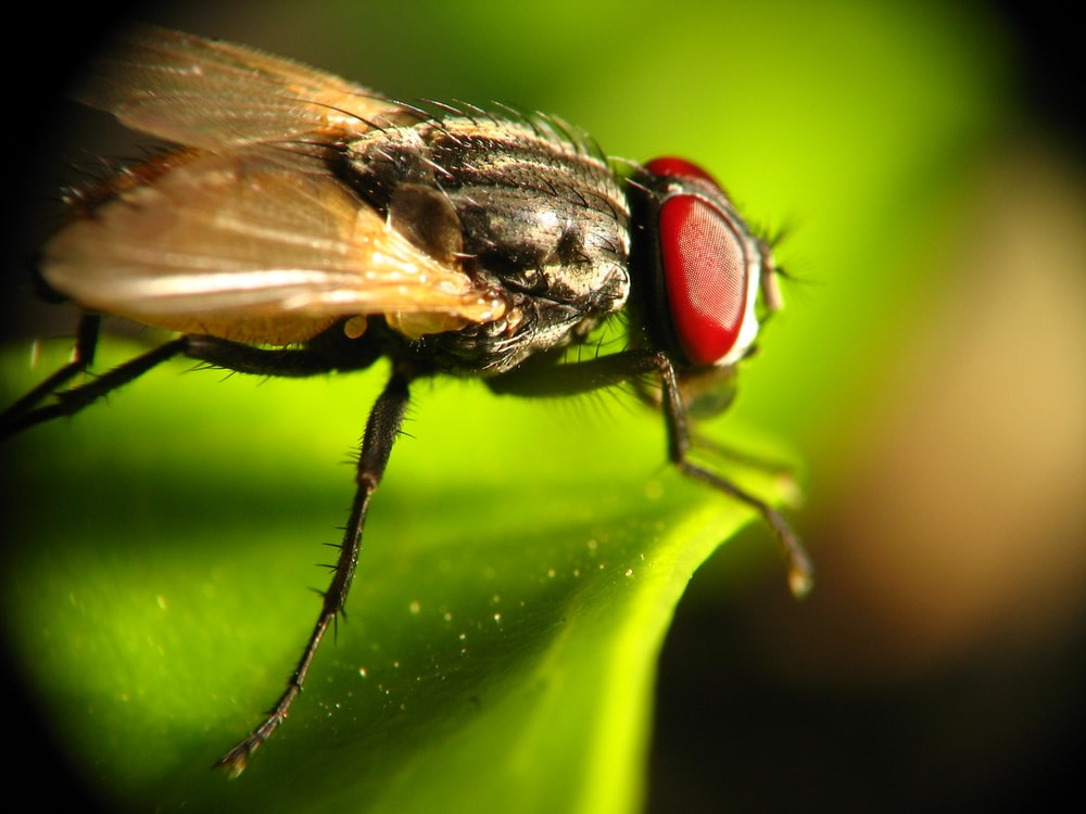 black and white fly perched on green leaf