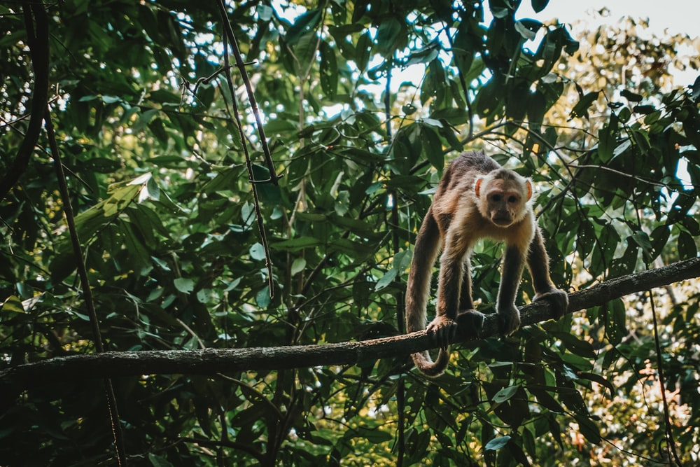 brown monkey on tree branch during daytime