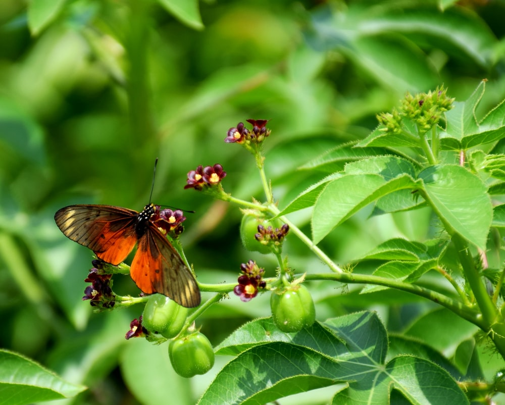 brown and black butterfly on green plant during daytime