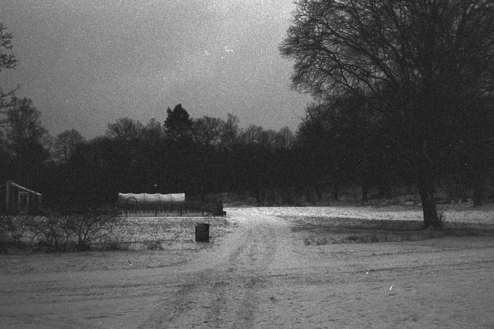 grayscale photo of trees and grass field