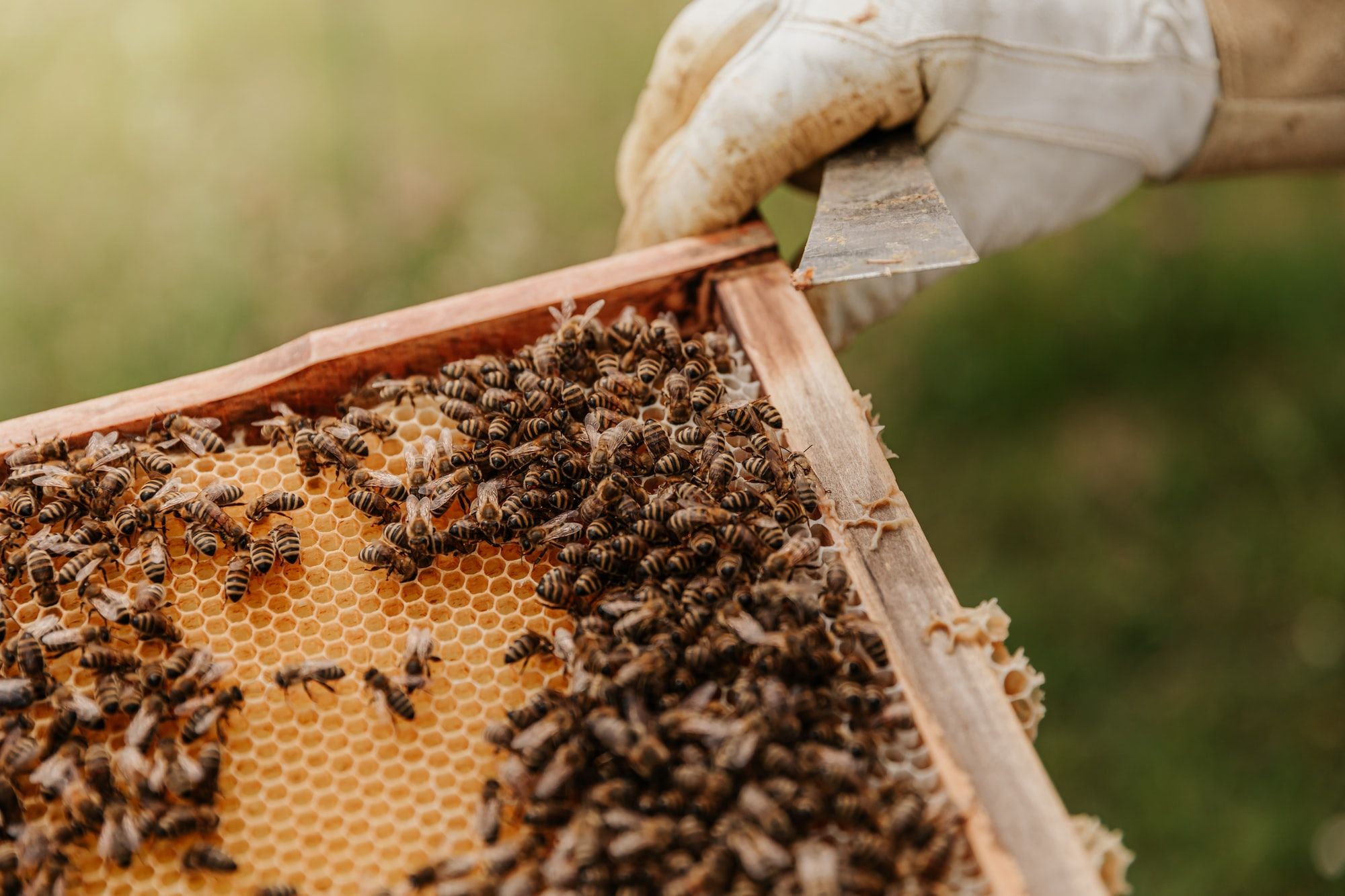Bizzy beekeepers in Bharatpur transform rural economic development