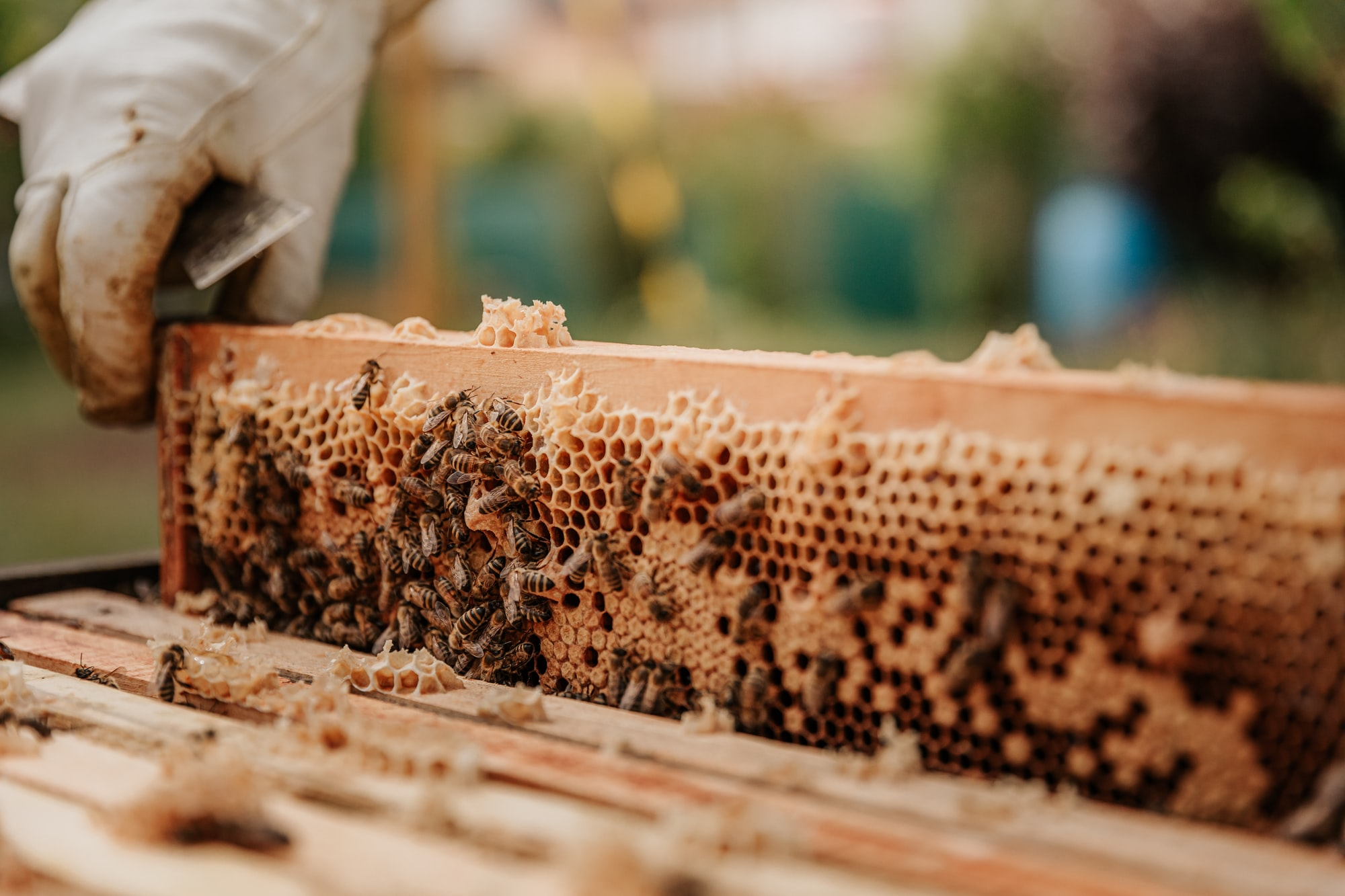 The Bee-yard